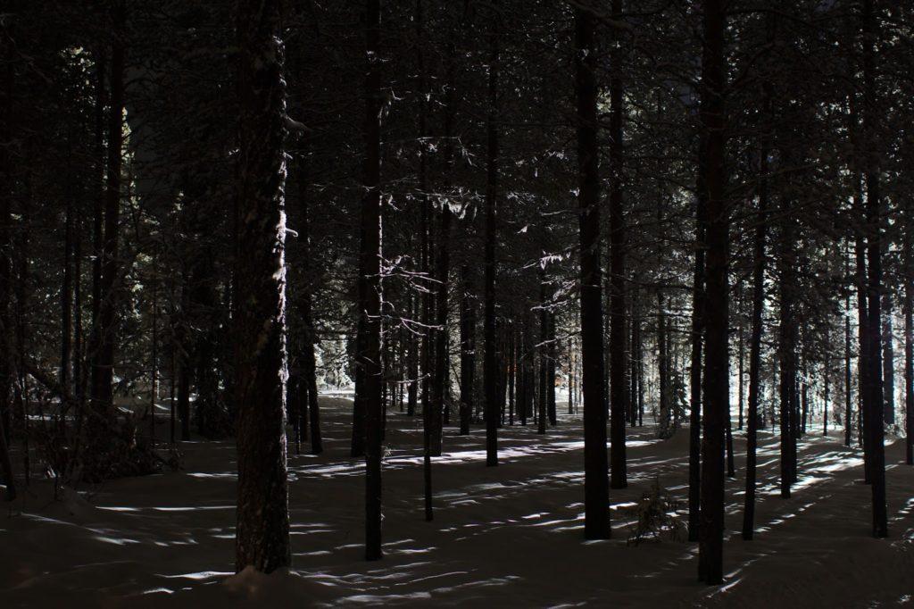 Mustavalkoinen metsä