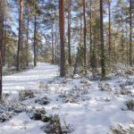 Hiihtoretki Solvallasta Espoon keskuspuistoon