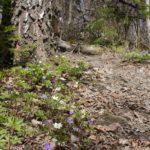 Päiväretki Karkalin luonnonpuistoon