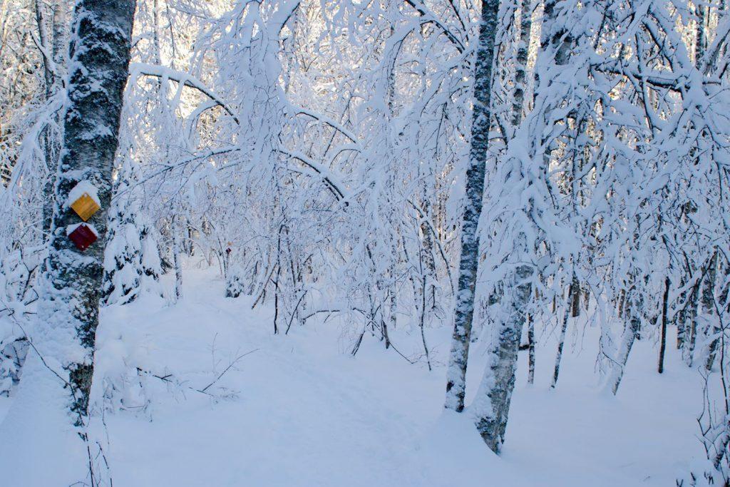 Meikon polkuja talvella