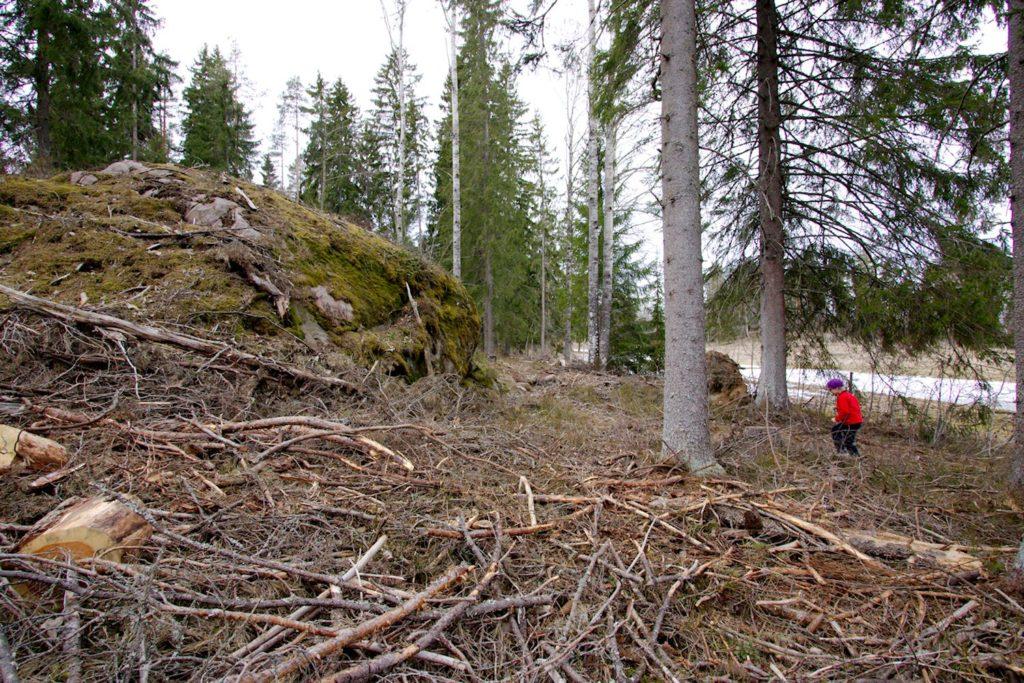 Metsätöitä