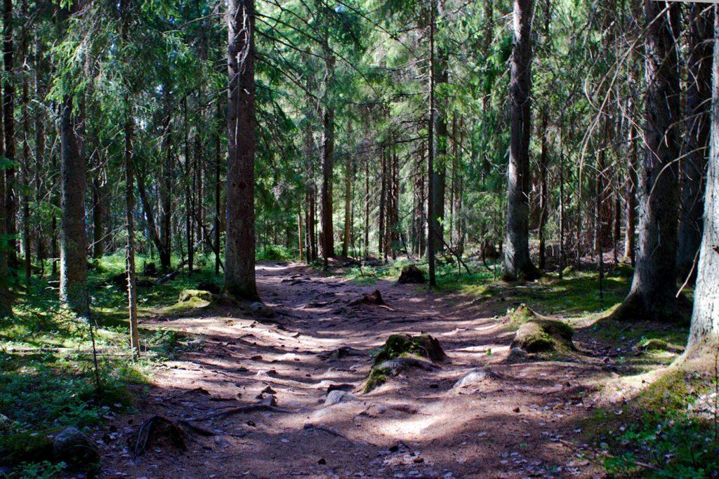 Polku Siikaniemestä Holma-Saarijärvelle