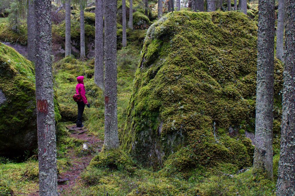 Sammaleisia kivenjärkäleitä Lortikanvuoren luontopolulla