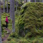 Syysviikonloppu Isojärven kansallispuistossa