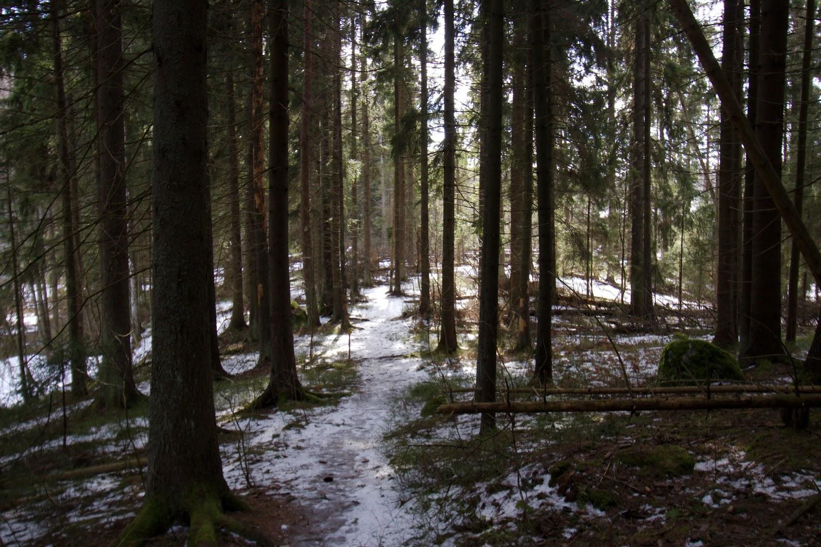 Metsikköä Oittaan luontopolun varrella, Kunnarlantien länsipuolella
