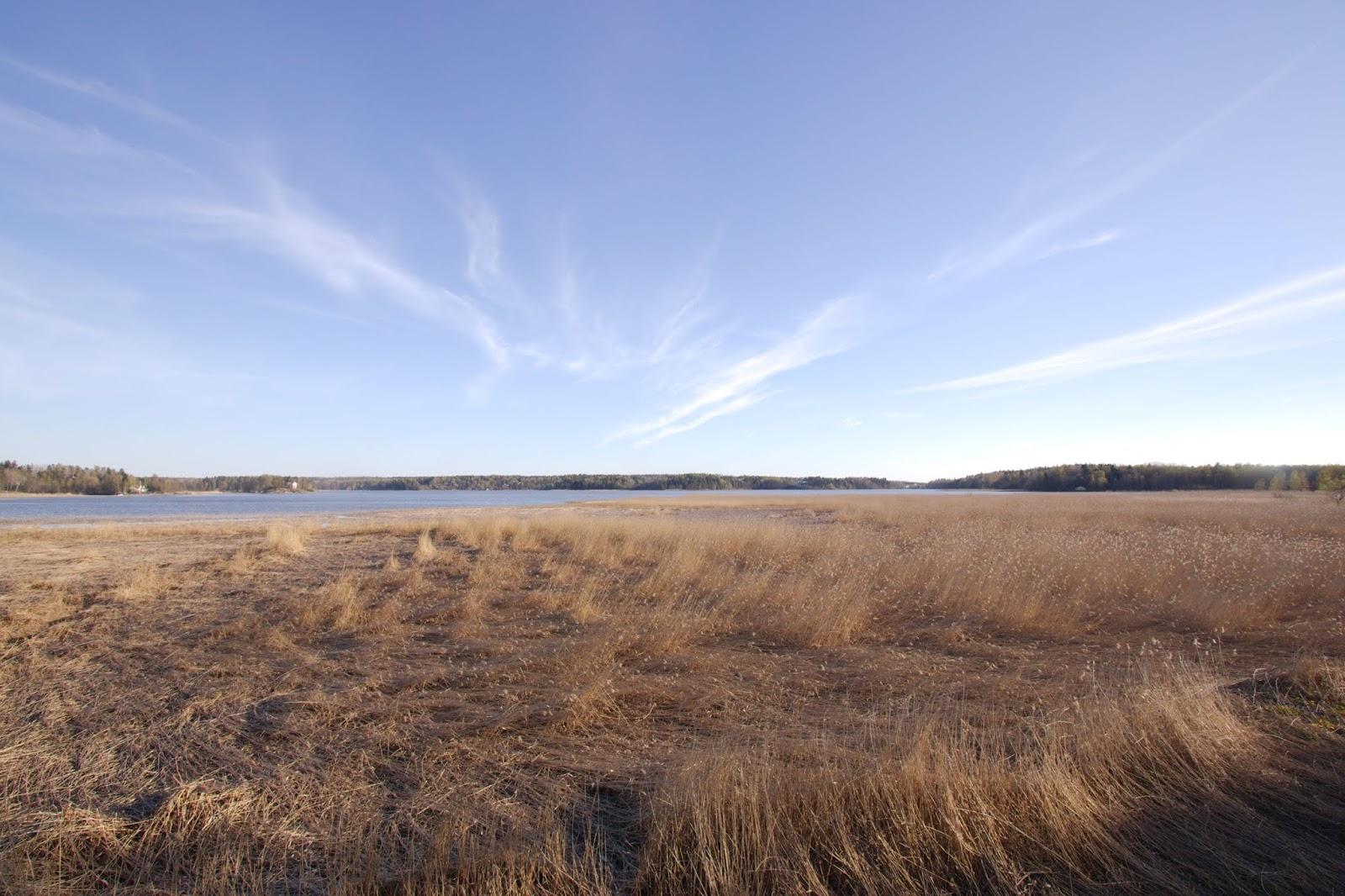 Näkymä lintutornilta kaislikon yli Espoonlahdelle