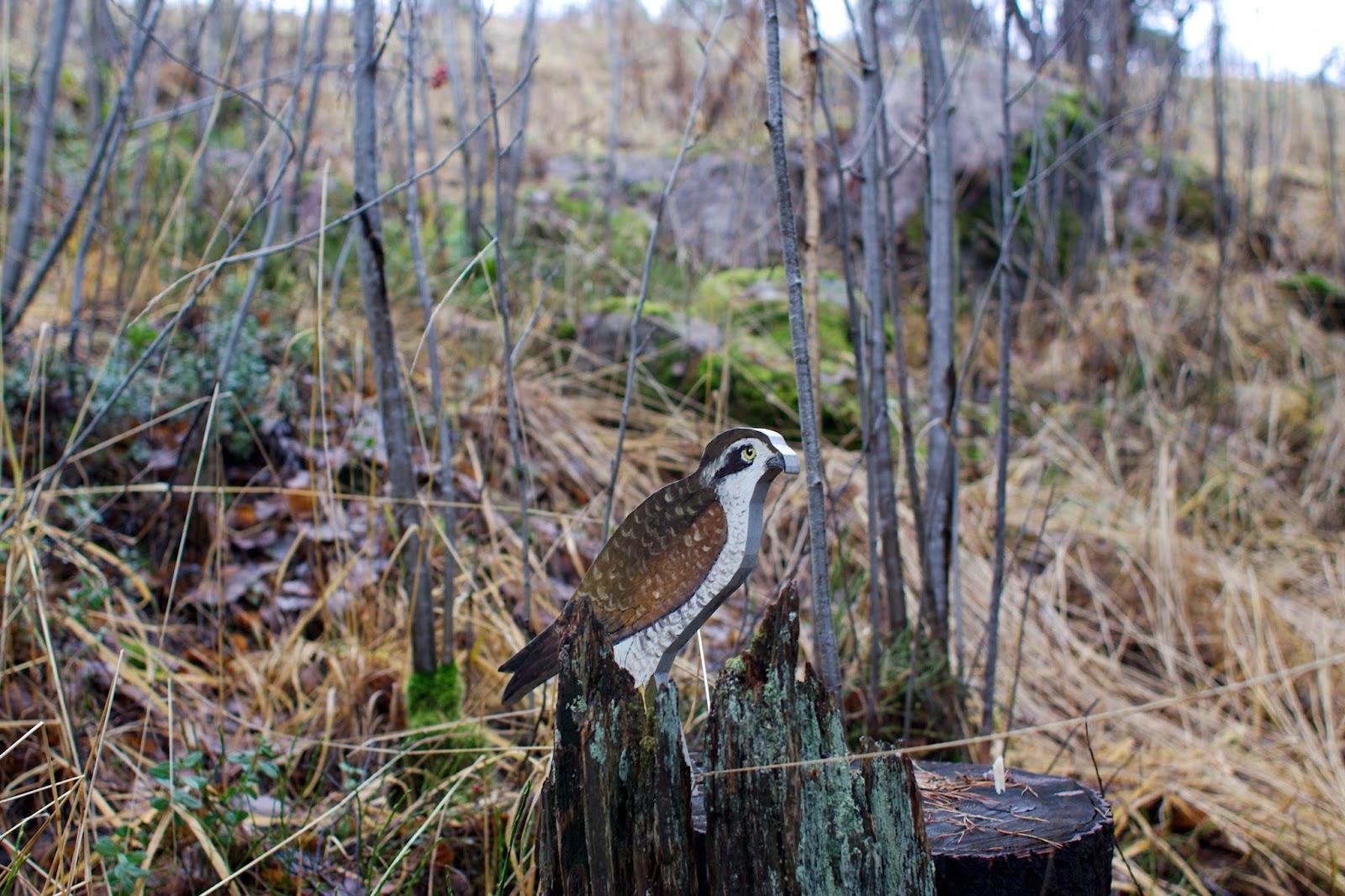Vanerista tehty lintu polun varrella