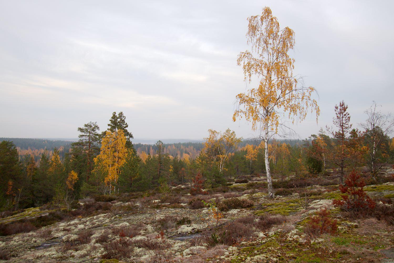 Maisemakallio Sahajärven eteläpuolella