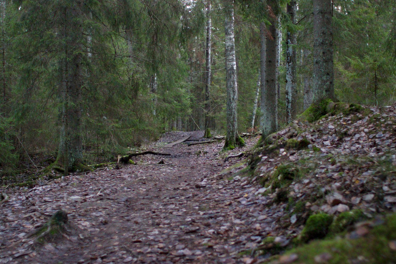 Geokatkoilya Lasten Kanssa Espoon Keskuspuiston Luontopolulla