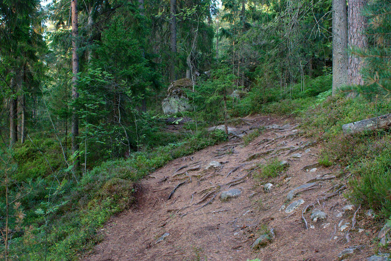 Juurakkoista polkua Pirttimäen ja Luukin välillä, Reitti 2000