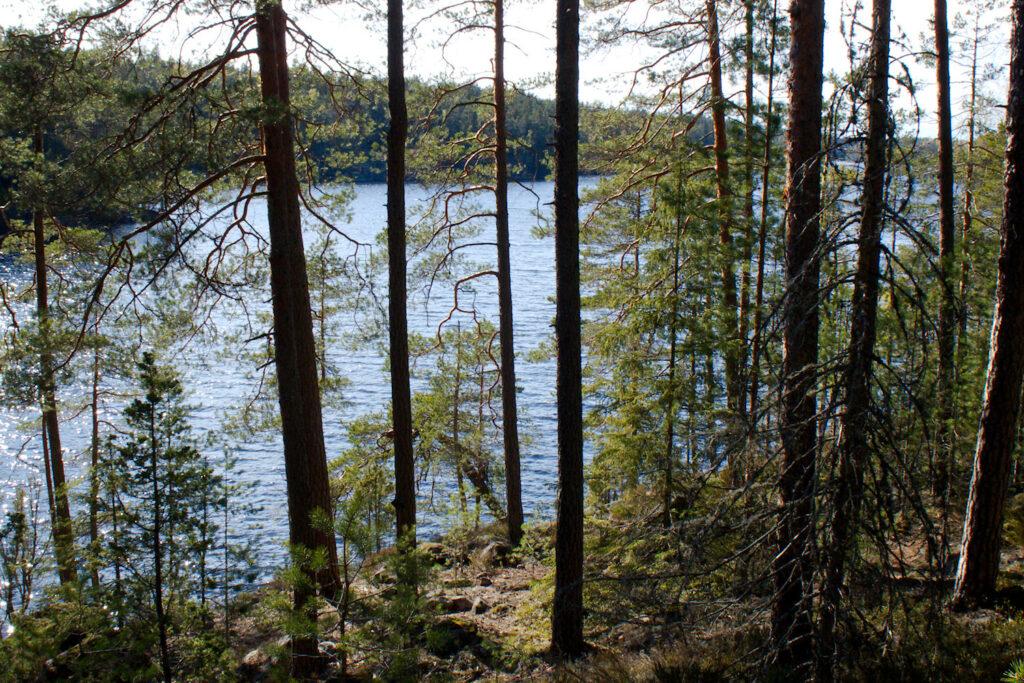 Saarijärvi pilkottaa puiden välistä