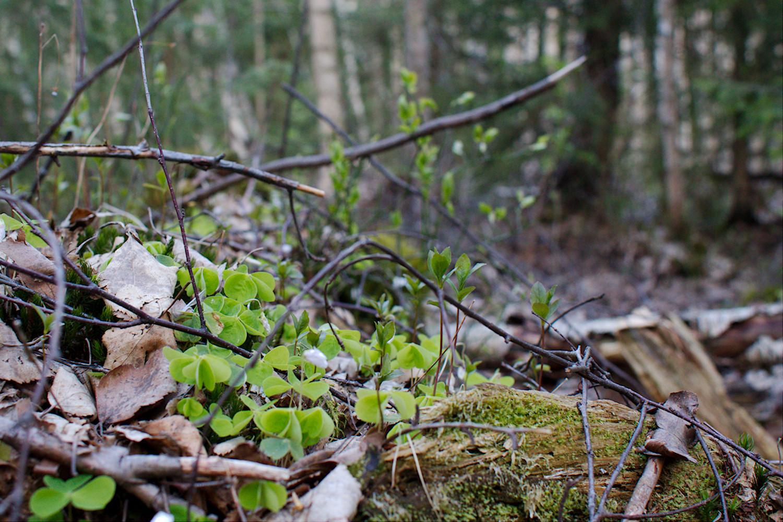 Kevätillan retki Espoon korkeimmalle kohdalle ja sitä ympäröivään metsään