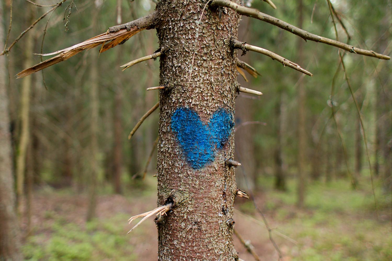 Sininen sydän puussa