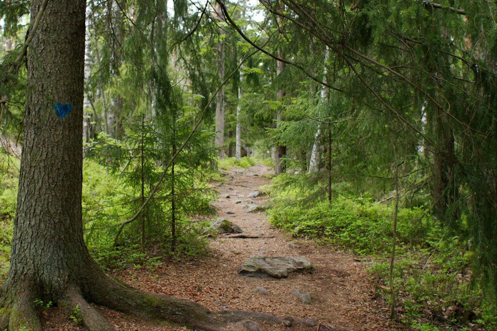 Polku sukeltaa metsään