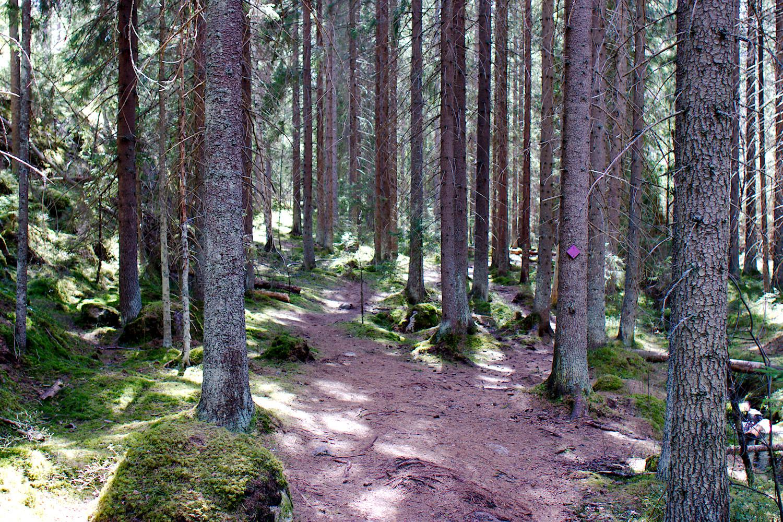 Metsäpolkua Klassarinkierroksen varrella