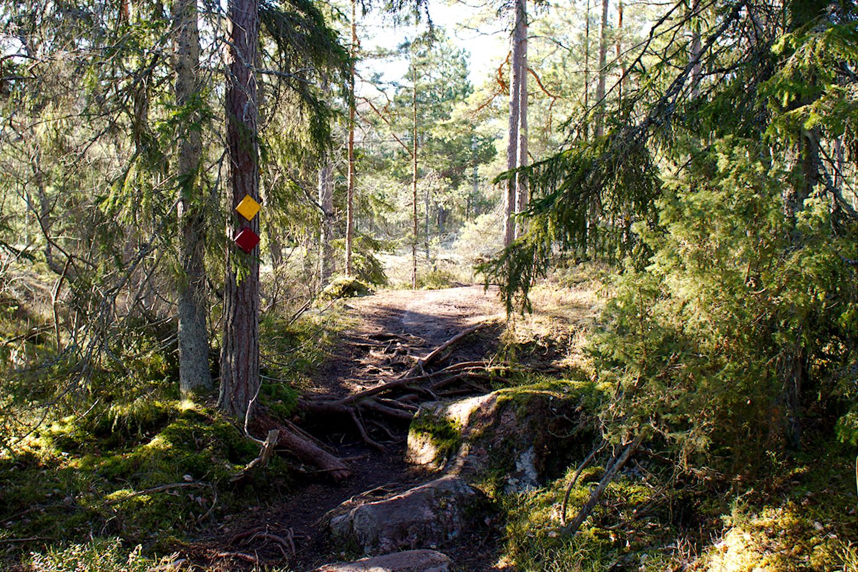 Juurakkoinen polku Telebergetin lenkillä