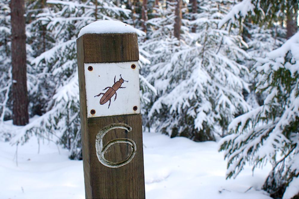 Nuuksion Kaarniaispolku talvella
