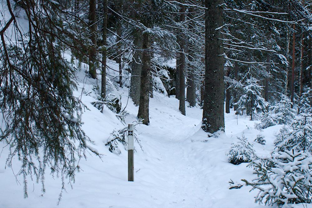 Kaarniaisplklu talvella -valkoinen reittimerkki