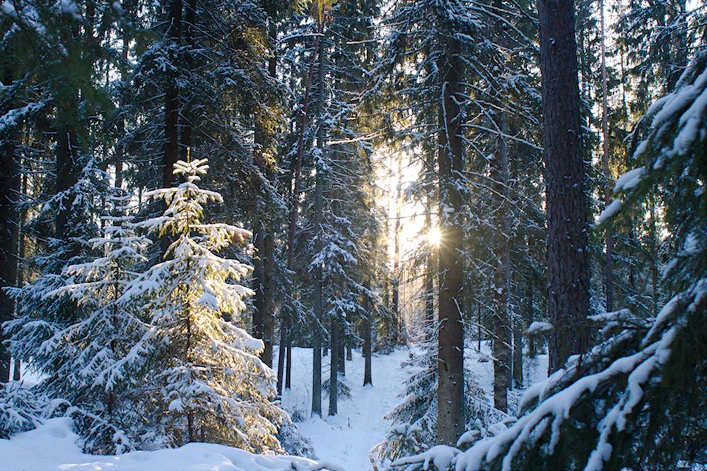 Kaarnaispolku talvella
