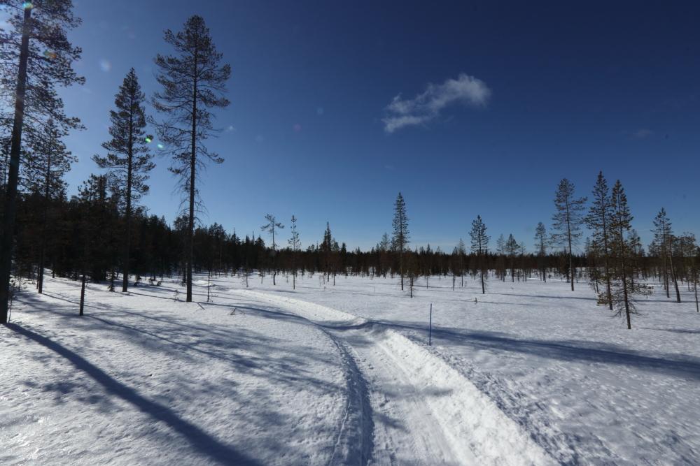 Peurakaltion talvipolku läpi suon