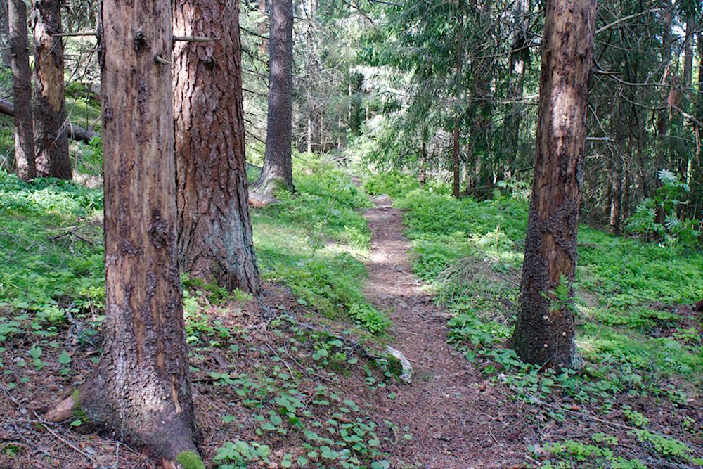 Mallusjoen vanhan metsän luontopolku