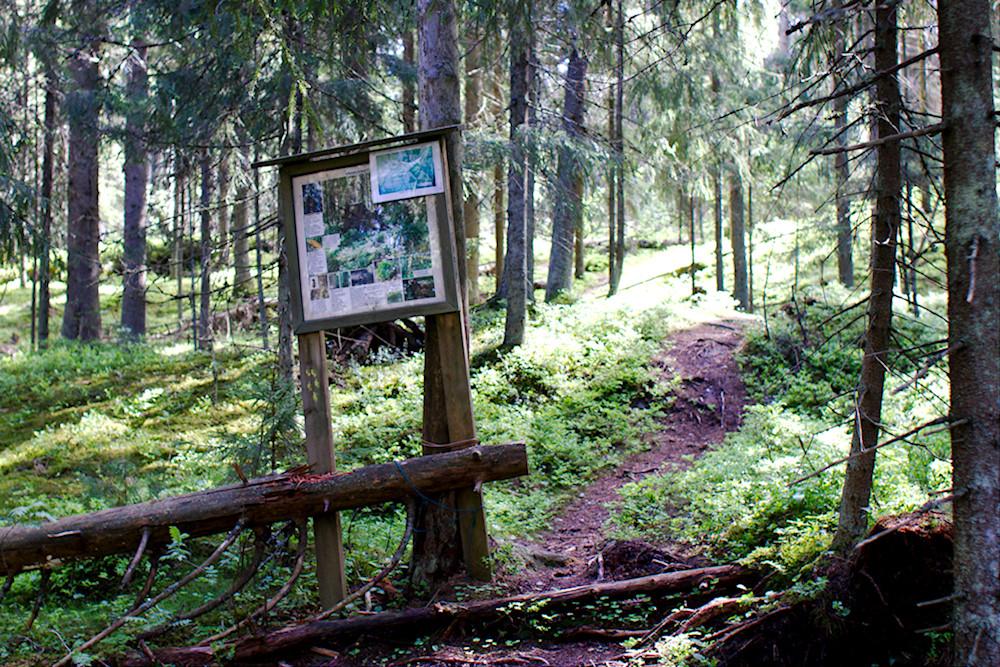 Mallusjoen vanha metsä